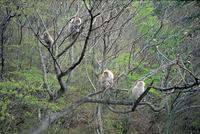 樹上の4頭のニホンザル