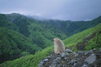 山の斜面にたたずむニホンザル