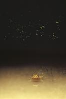 トノサマガエルとゲンジボタルの光跡