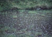 雨の水田 32097000709  写真素材・ストックフォト・画像・イラスト素材 アマナイメージズ
