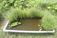 メダカ プラスチック製の小さな池