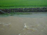 水田 大雨 あふれた水は海へ