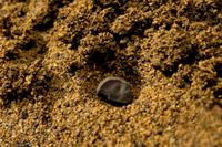 アサガオ タネまき 32098000680| 写真素材・ストックフォト・画像・イラスト素材|アマナイメージズ