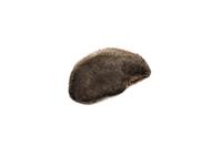 アサガオ 種子 32098000930| 写真素材・ストックフォト・画像・イラスト素材|アマナイメージズ