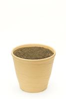 アサガオ 植木鉢での成長7