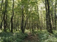 カブトムシの生息地 夏の雑木林