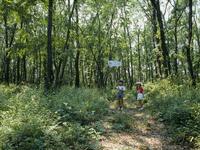 カブトムシを探す子供 雑木林