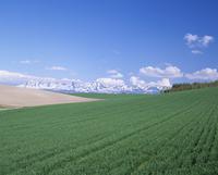 小麦畑と十勝岳連峰