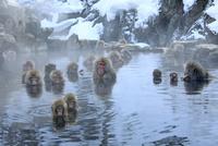 温泉に入るニホンザル 32109006266| 写真素材・ストックフォト・画像・イラスト素材|アマナイメージズ