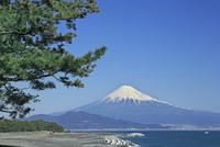 三保の松原と富士山