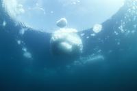 海中から見た流氷