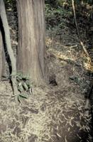 アナグマの巣穴