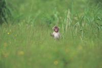 草むらにたたずむニホンザルの子