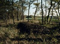 落ち葉を積んだ堆肥(中はまさにカブトムシの幼虫の宝庫) 32123000685| 写真素材・ストックフォト・画像・イラスト素材|アマナイメージズ