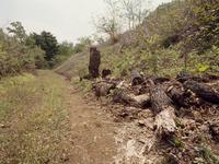 クヌギやコナラの朽木(土に埋もれたような朽木)はカブトムシの幼虫探しのポイントの一つ