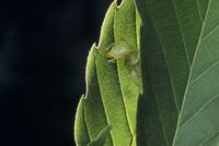 コロギスの幼虫 巣完成間近
