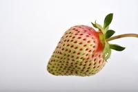 イチゴの成長