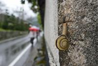 雨の日のカタツムリ 32137004528  写真素材・ストックフォト・画像・イラスト素材 アマナイメージズ