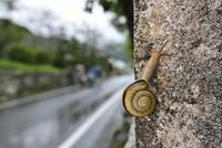 雨の日のカタツムリ 32137004544  写真素材・ストックフォト・画像・イラスト素材 アマナイメージズ