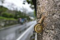 雨の日のカタツムリ 32137004545  写真素材・ストックフォト・画像・イラスト素材 アマナイメージズ
