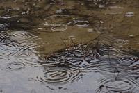 春の雨とため池