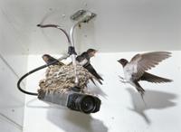防犯カメラ上の巣で待つヒナに餌を運ぶツバメ