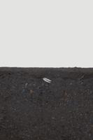 ヒマワリの根の成長 B-�@