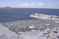 カナダ マドレーヌ島の港にできた蓮の葉氷