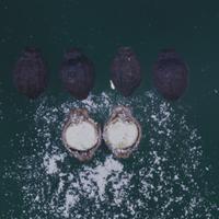 オシロイバナの種・種の断面