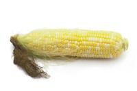 トウモロコシの中身 白バック