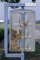 看板の中のスズメの巣 開けて中を見る