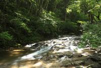 オオサンショウウオの生息河川