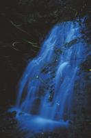 飛翔するゲンジボタルの群れの光跡