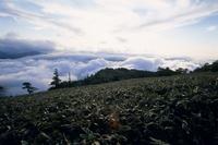 ササ原と雲海 秋 32180000703  写真素材・ストックフォト・画像・イラスト素材 アマナイメージズ
