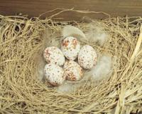 ツバメ 卵