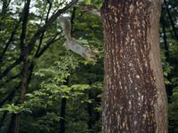 木に飛びつくニホンリス