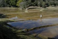 トウキョウサンショウウオの生息地 32186000213| 写真素材・ストックフォト・画像・イラスト素材|アマナイメージズ