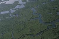 湿地帯を埋めるマングローブ 32188000118| 写真素材・ストックフォト・画像・イラスト素材|アマナイメージズ