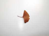 オカダンゴムシ 食べ物実験(イチョウ枯葉) よく食べる (※ 32190000235| 写真素材・ストックフォト・画像・イラスト素材|アマナイメージズ