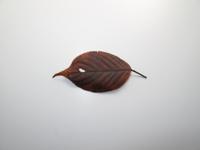 オカダンゴムシ 食べ物実験(サクラ枯葉) よく食べる 32190000243| 写真素材・ストックフォト・画像・イラスト素材|アマナイメージズ