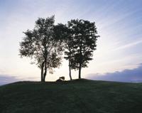 キタキツネ 子供 大きな木の下のシルエット 32196000200| 写真素材・ストックフォト・画像・イラスト素材|アマナイメージズ