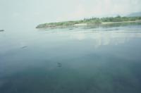 ウミアメンボの生息環境