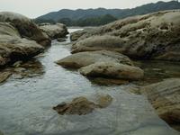 ケシウミアメンボの生息環境