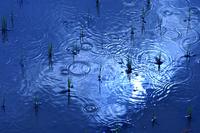 田植えを終えた水田に 突然降り始めた大粒の雨
