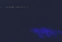 ウミホタルの海面発光