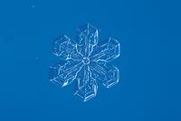 雪の結晶 扇形結晶  顕微鏡倍率40倍