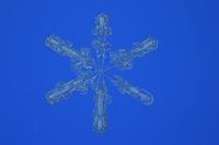 雪の結晶(広幅六花)