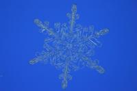 雪の結晶(樹枝状結晶)