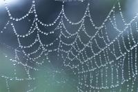水滴のついたクモの巣