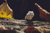 ハツカネズミ 跳ぶ